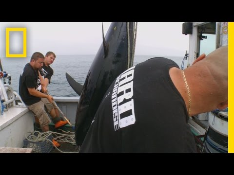 Catch Of The Week - Go Hard Or Go Home | Wicked Tuna