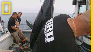 Go Hard or Go Home | Wicked Tuna: Catch of the Week