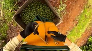 Australia , backpackers, farm work, apple thing, avocado picking, busselton jetty