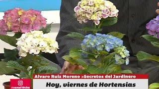 El jardinero en casa hortensias viyoutube for Jardinero en casa