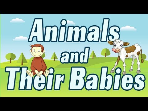 All pictures of baby animals with name in hindi