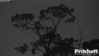 Southwest Florida Eagle Cam - Season 7 Preview