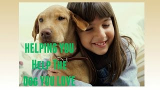 Online Dog Training At Your Fingertips | Easy & Proven Solution In Home Dog Training Videos