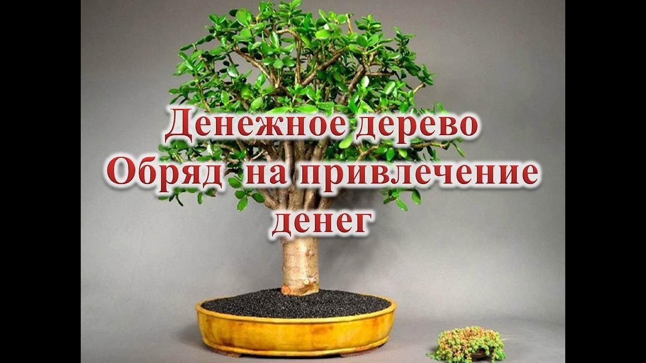 Денежное дерево  Обряд на привлечение денег