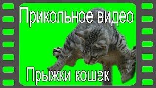 Прикольное видео.  Прыжки кошек