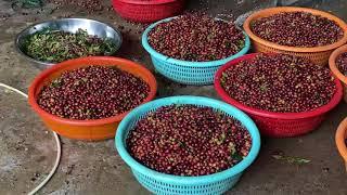 [Vlog] 달랏 - 캐녀닝, 와이너리, 차밭, 커피공…