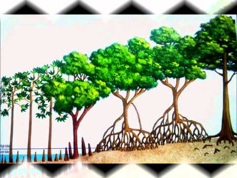 Tropical Mangrove Forest