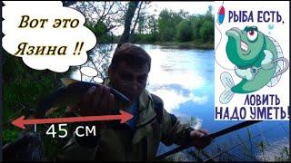 Весна-2019г.Риболовля на Язя. Річка Лобва. Свердловська область.