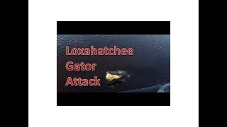 Loxahatchee Bass Fishing Gator Scare