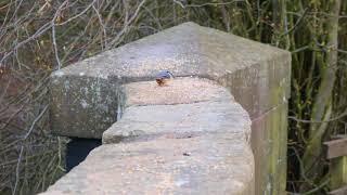 Knypersley Reservoir SOT