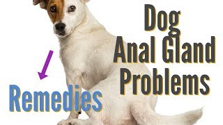 Dog Anal Gland Problems