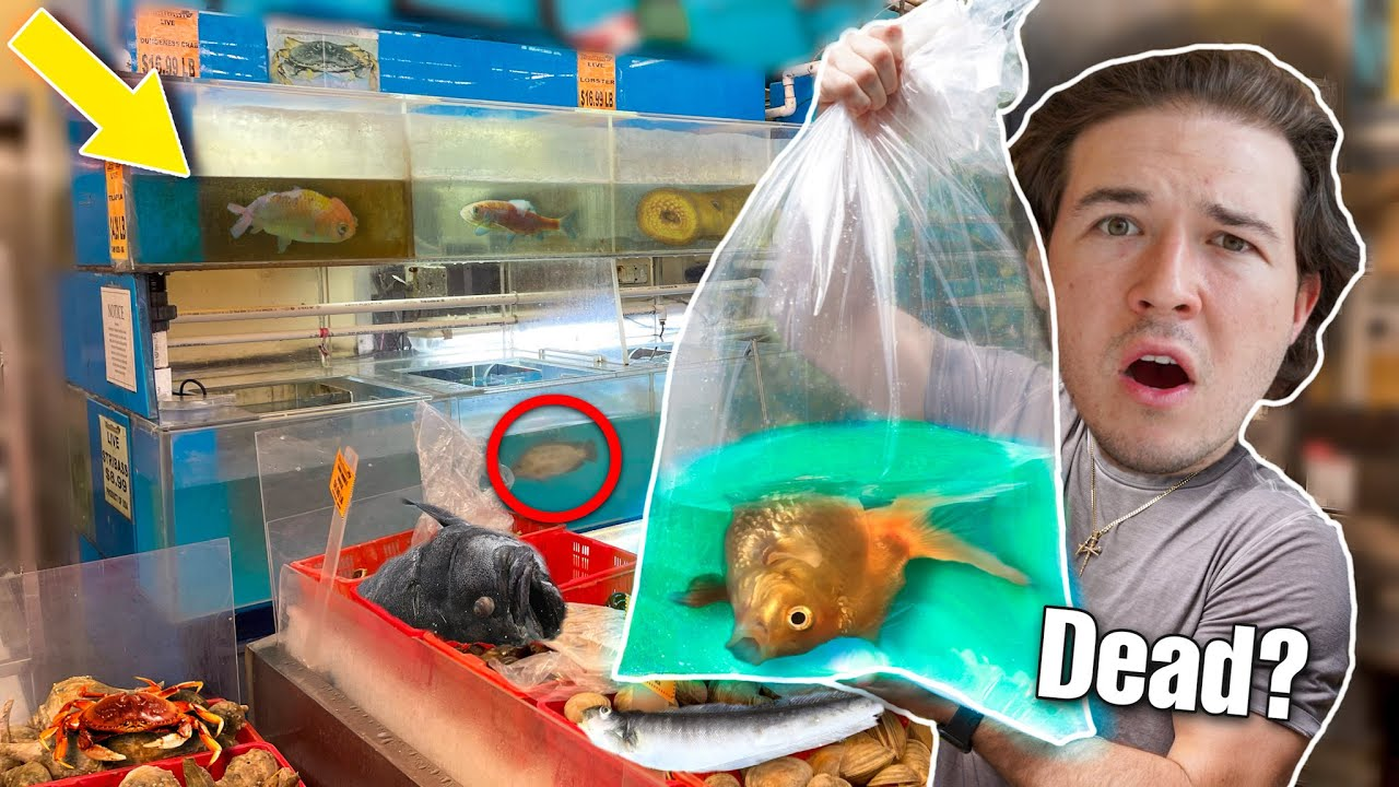 SAVING *LIVE FISH* From International Food Market... (they would've died)