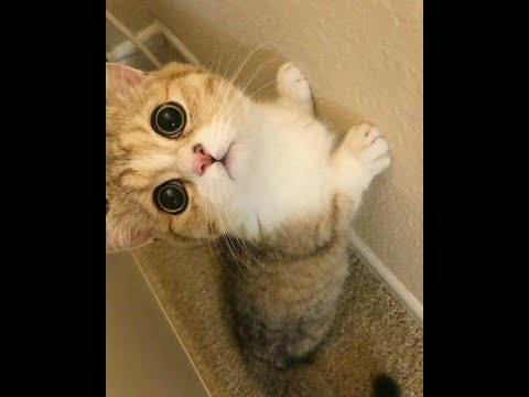 Funniest dog Vs cat videos #cute #funny #sweet #cat #dog #videos #kitten #puppies