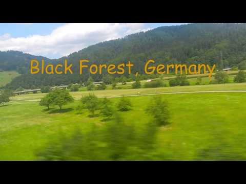 Black Forest, Germany - in the nature