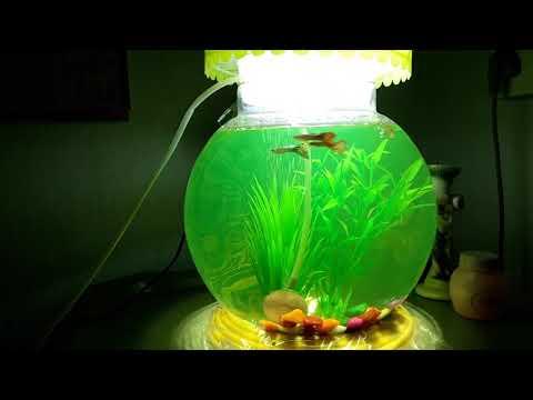 Aquarium globe with a fluorescent effect 🤗🤗