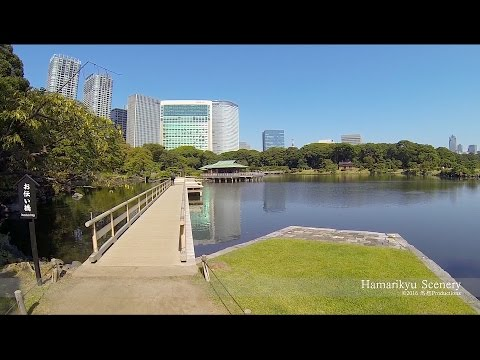 浜離宮恩賜庭園  Walk in Hamarikyu-teien, Tokyo JAPAN