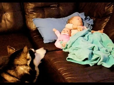 How are Alaskan Malamute's with Toddlers?? Watch Tonka Watching Over Sleeping Toddler!!