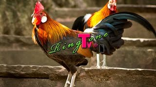 Rooster - Ringtone