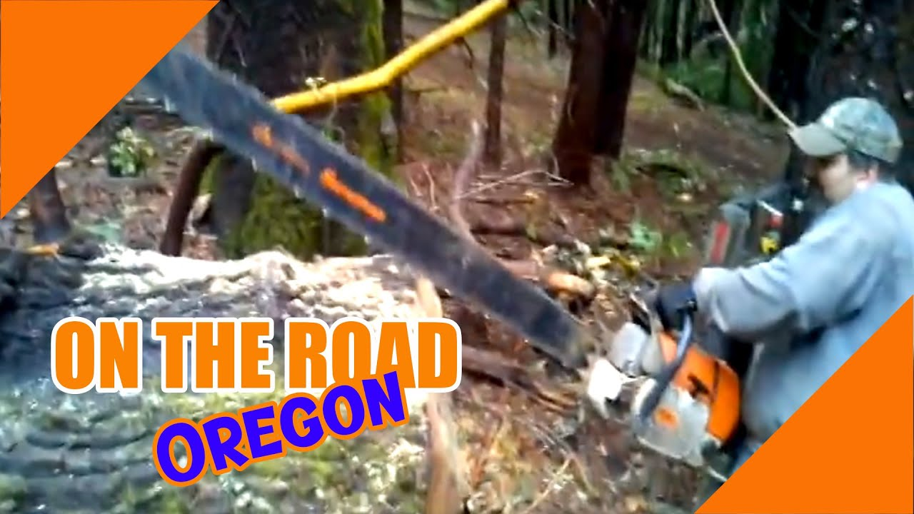 6 FOOT Chain saw Cutting a Black Oak-OregonBurls com