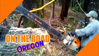 6 FOOT Chain saw Cutting a Black Oak-OregonBurls.com
