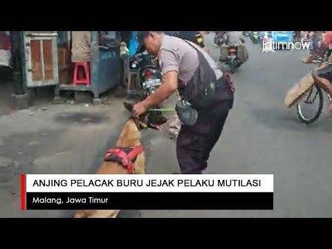 Anjing Pelacak Buru Jejak Pelaku Mutilasi