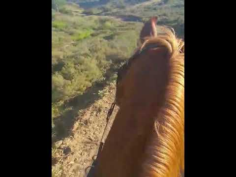 Early morning trail ride in Orange Park Acres