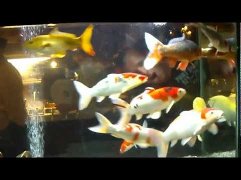 Eighth Japanese Koi Forum Meeting 2012 ( Aquarium Wokmasters )