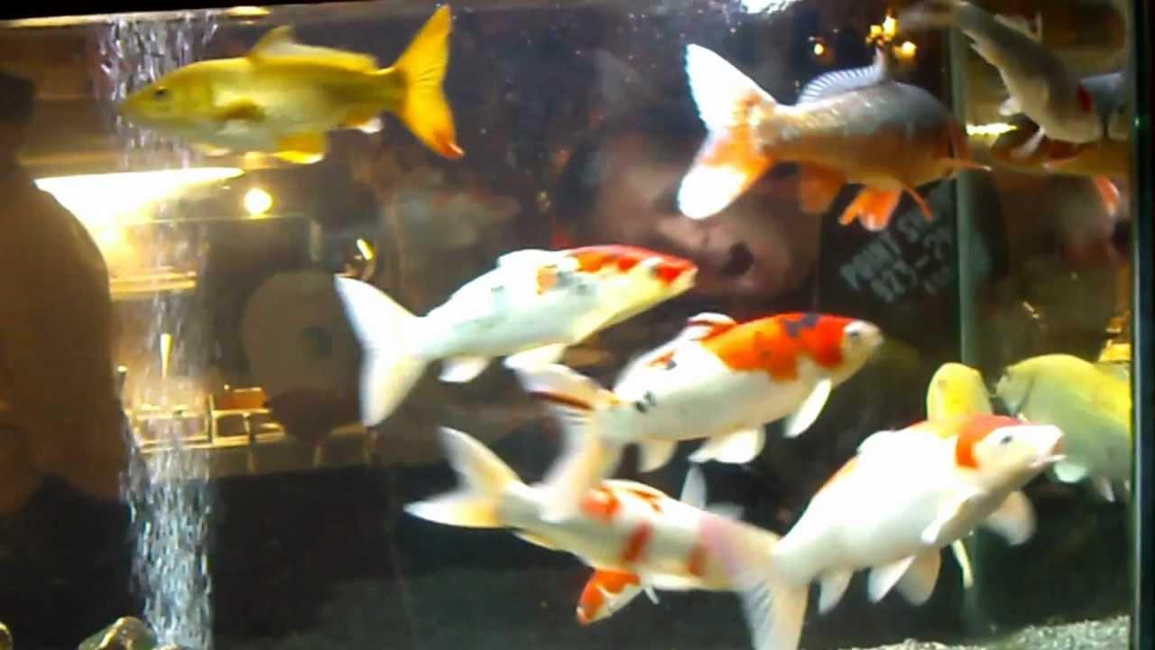 Fish aquarium japan - Eighth Japanese Koi Forum Meeting 2012 Aquarium Wokmasters Youtube