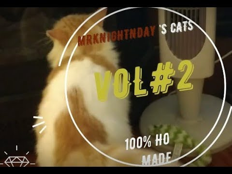 Top 20 Funny Cats Moments Compilation.(Never seen before!) 2019 VOL#2