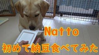 きなこ初めて納豆を食べます。 こちらのURLからチャンネル登録をお願い...