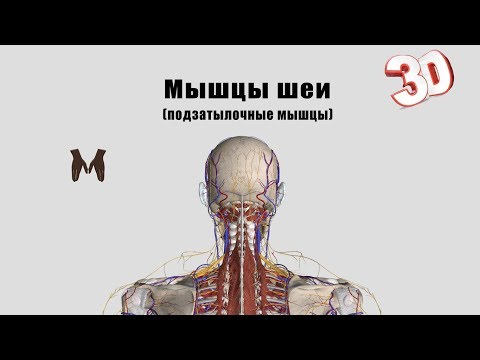 Как обследовать мышцы шеи