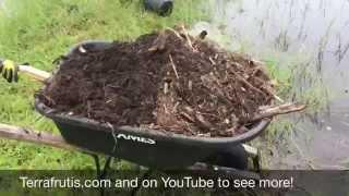 Planting Bananas at Robert's Farm In Florida