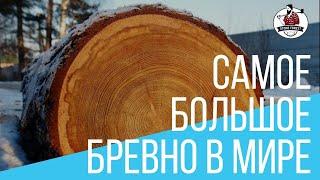 размеры бревен лиственницы и кедра. Тонкомер. Отборные бревна лиственницы. Строевой лес