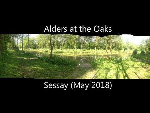 Fishing Alders at The Oaks - Sessay-North Yorks in May 2018