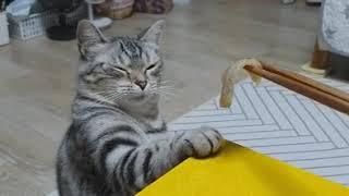 고양이가 홍어회를 만났을때..