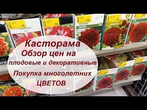 Касторама обзор покупки многолетников Обзор плодовых и цен.