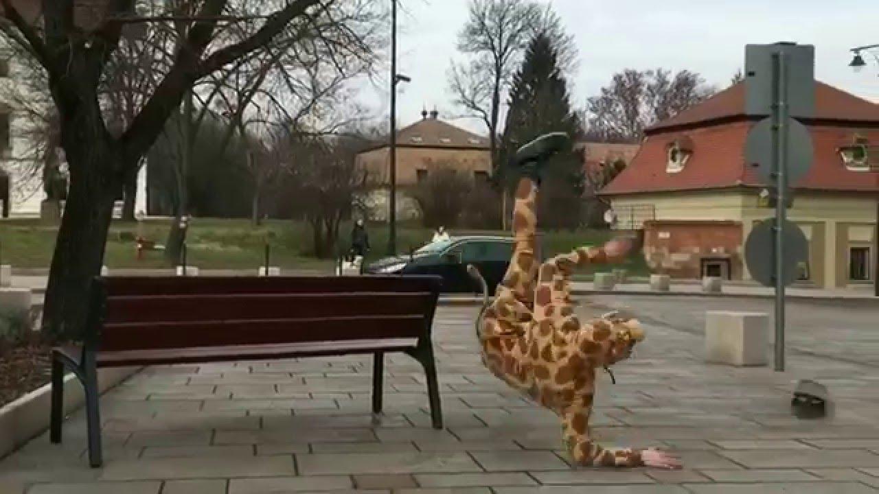 meddig van a zsiráf pénisze