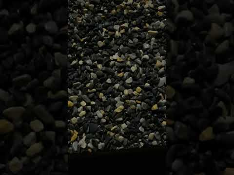 Sản xuất đá sỏi trang trí cây cảnh. Bể cá. Gắn tường. Rải thảm tiểu cảnh. 0977309100