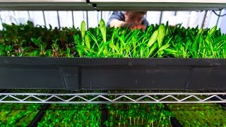 Smart Seedling Racks for Commercial Hydroponics