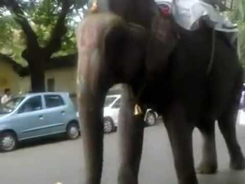 Funny video khalkar chowk sadashiv peth