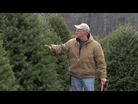 NJ Christmas Tree Farm Wins Contest, Has Trees at White House