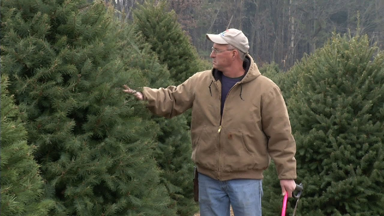 NJ Christmas Tree Farm Wins Contest, Has Trees at White House - YouTube