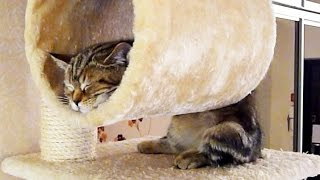 Funny Cats and Cute Kittens Sleeping in Weird  Positions