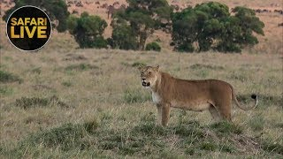 safariLIVE - Sunset Safari - November 12, 2018