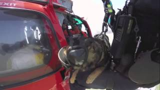 Coast Guard K-9 Hoist Training