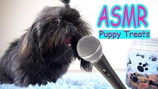 MY DOG TRIES ASMR! Eating Dog Treats   Shih Tzu