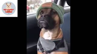 🤣 Funniest 🐶 Dogs CORONA VERUS - Try Not To Laugh - Funny