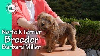 Norfolk Terrier Breeder  Barbara Miller