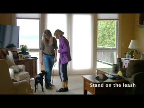 How To Stop a Dog From Jumping : Stand on Leash