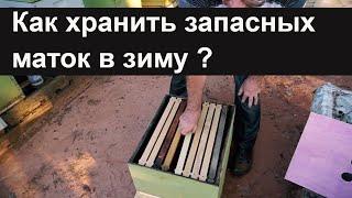 Пасека #56 Как хранить запасных маток в зиму ? Гарантия около 100%.Пасека.Пчеловодство